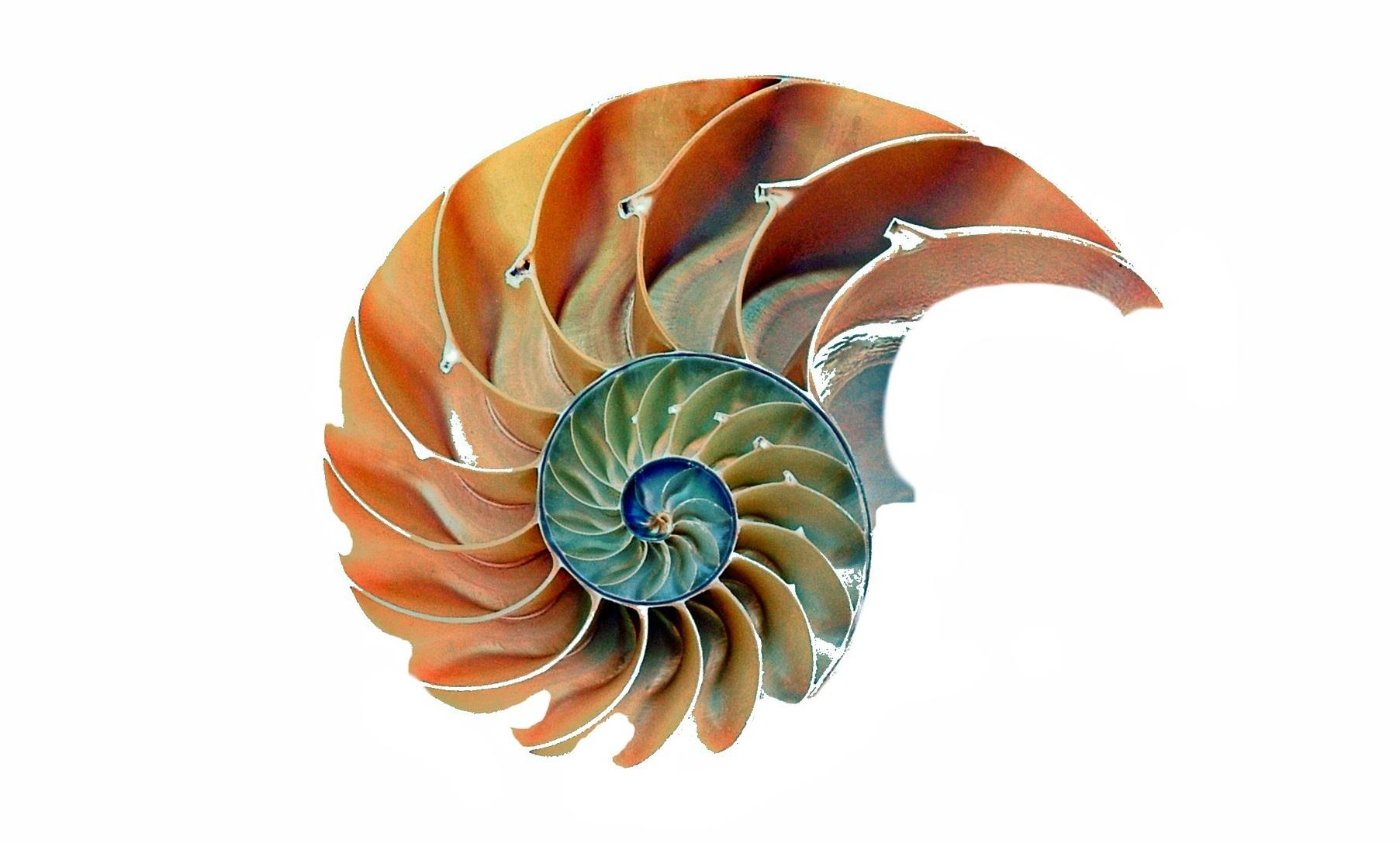 golden ratio nautilus shell
